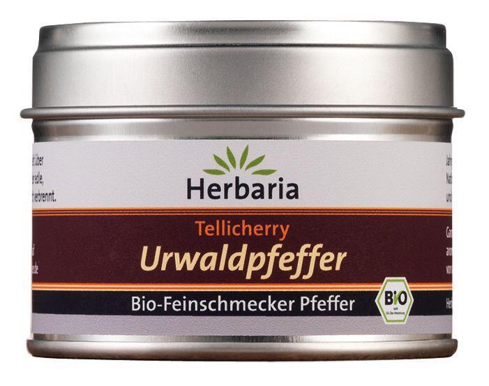 Herbaria Tellicherry Urwaldpfeffer