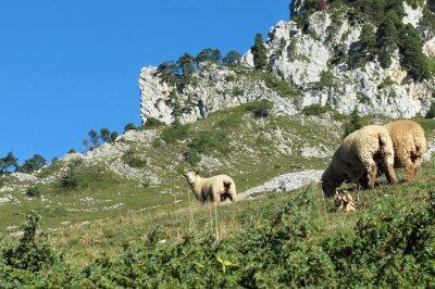 Auvergne (2): Fleischige Eintöpfe und Schmorgerichte