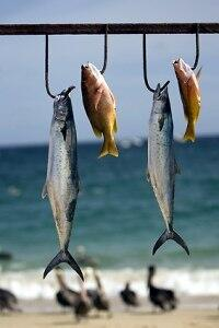 Flunder, Flussaal und Makrele