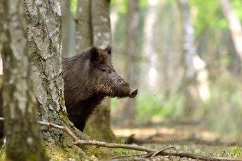 Wilde Kostbarkeiten aus Wald und Flur